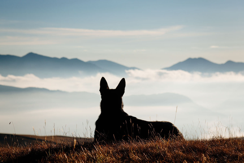 Собака встречает рассвет в горах